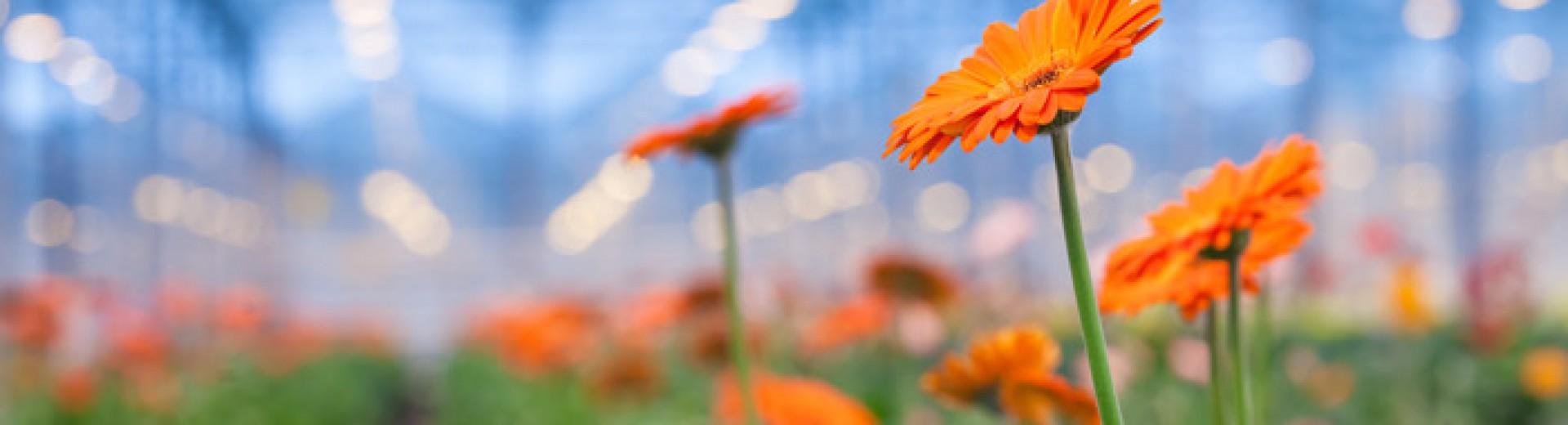 Kemeling Kunststoffen Land en tuinbouw kassen bloemen