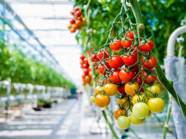 Kemeling Kunststoffen Land en tuinbouw kassen tomaten